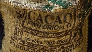 Criollo cocoa beans from Venezuela