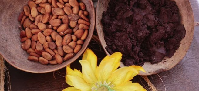 Raw cacao seeds and ground cocoa nibs