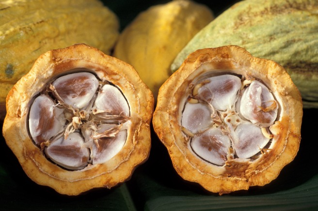 Fresh Cacao Seeds and Pulp